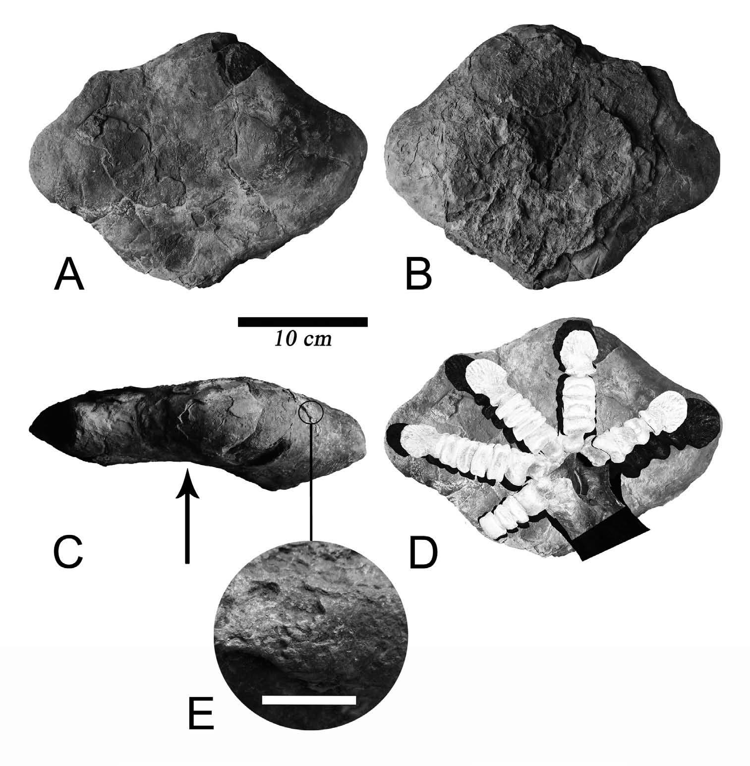 Clasificacion de las rocas yahoo dating